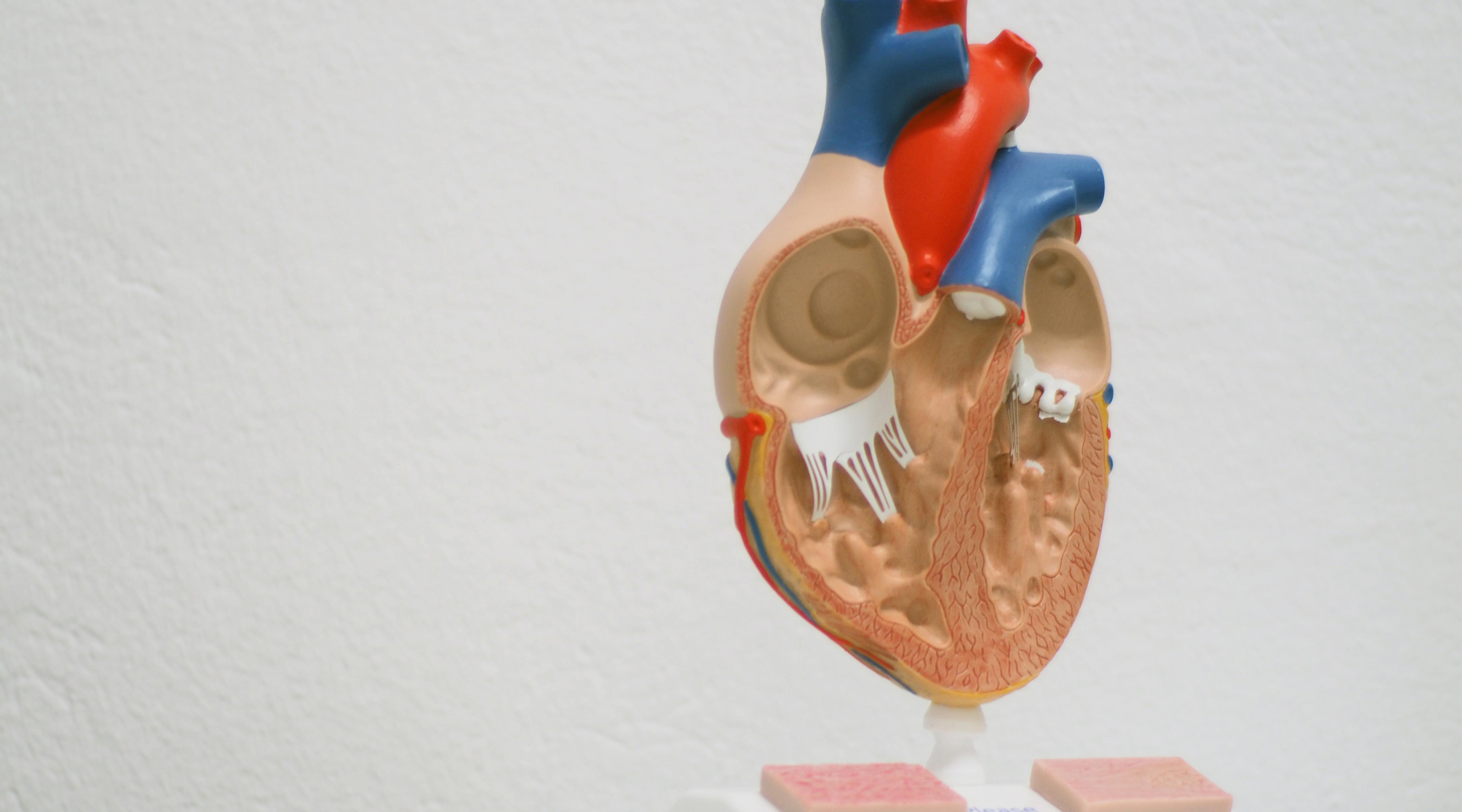 Fein Kleintieranatomie Fotos - Menschliche Anatomie Bilder ...